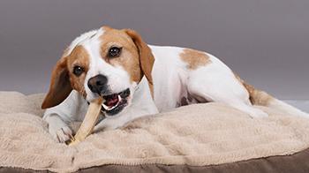 Cleaning Dogs Teeth Advice Welfare Rspca