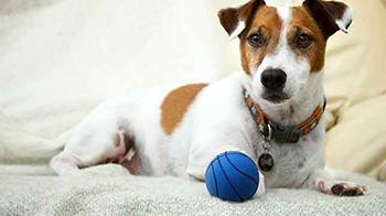 Around 40 percent of dogs are fearful of loud noises such as fireworks © RSPCA
