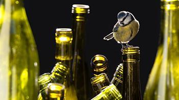 The impact of litter on wildlife © Chris Packham, Keep Britain Tidy
