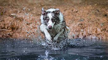 Water dog © Caprice Wilton