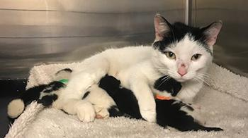 Cats found under tube station escalators now in our care © RSPCA