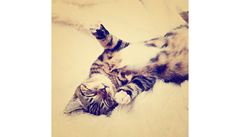 Instagram pic of a cat © RSPCA
