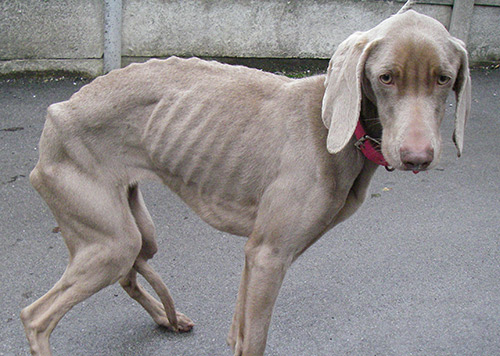 Dog with burns on their body