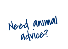 Animal Advice