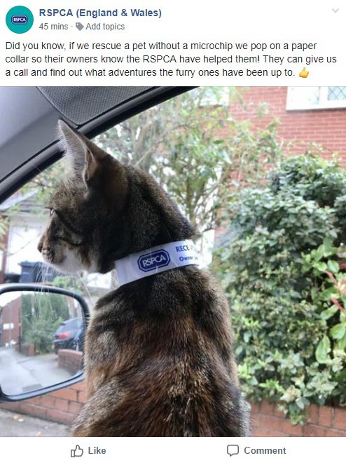 Cat rescue facebook post