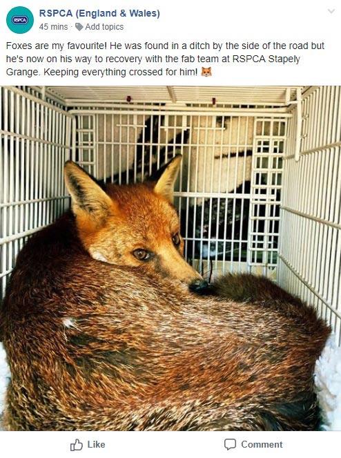 Fox facebook post