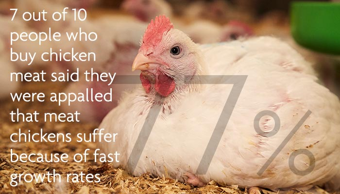 7 out of 10 people who buy chicken are appalled chickens suffer because of fast growth © RSPCA