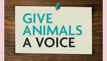 Give animals a voice © RSPCA