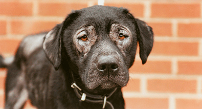 Dog with severe skin condition © RSPCA