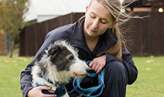 Animal Care Assistant with Lurcher crossbreed at RSPCA Animal Centre © RSPCA