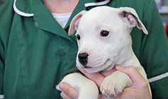 Dog heing held by RSPCA vet nurse © RSPCA