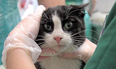 Cat being checked by RSPCA staff © RSPCA
