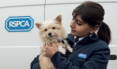 Dogs leg being checking by RSPCA staff © RSPCA