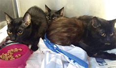 Four kittens in a cat pod © RSPCA