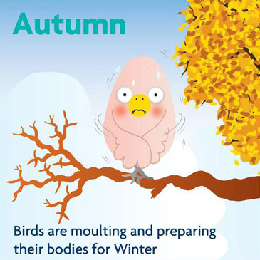Autumn - birds are moulting and preparing their bodies for winter