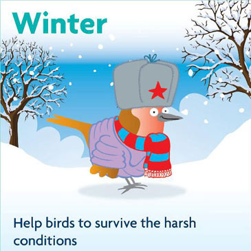 Winter - help birds to survive the harsh conditions