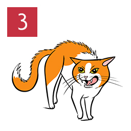 Graphic of cat standing with arched body and hair raised showing teeth angrily © RSPCA