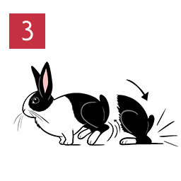Graphic of rabbit thumping back legs on the ground © RSPCA