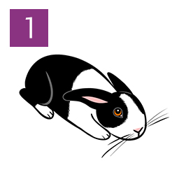 Graphic of rabbit crouched and tense © RSPCA