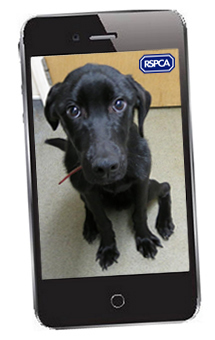 Mobile phone with RSPCA message