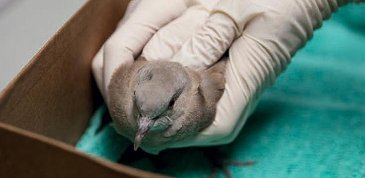 Bird being examined