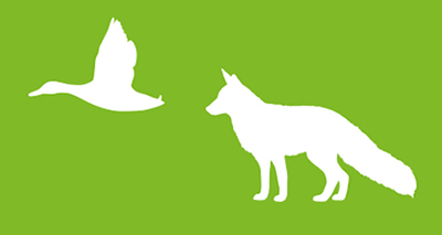 Bird and fox graphic