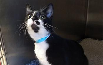Black and white cat in cat pod