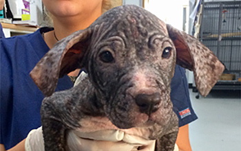 El the dog with no fur after rescue