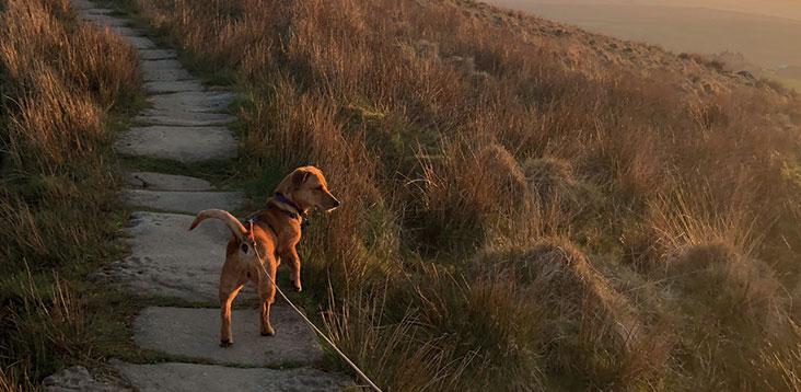 Jess the dog on a walk