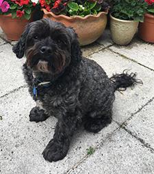 Teddy the dog in the garden