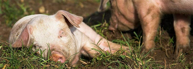 Change the lives of farm animals