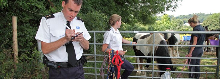 RSPCA Inspectors recording details of horses grazing in field of flowering Ragwort © RSPCA photolibrary