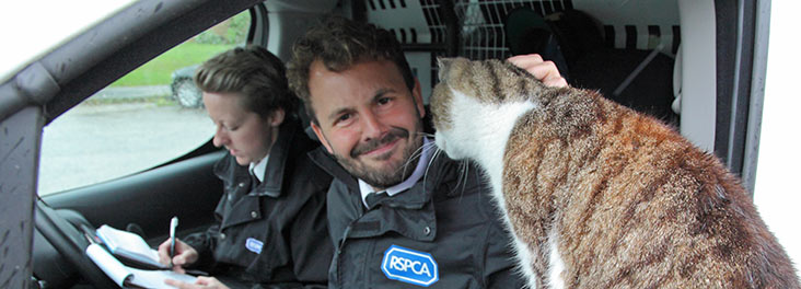 RSPCA Inspector stroking single adult cat © RSPCA photolibrary