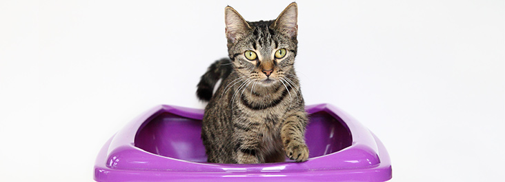 Cat in a litter tray © RSPCA Photolibrary