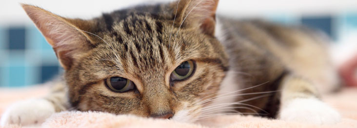 cats neutering   cats spaying rspca
