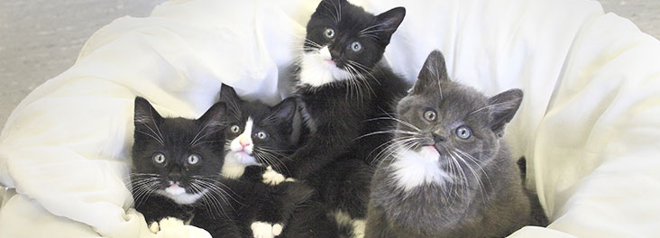 Learn What To Do With Stray And Feral Cats Rspca