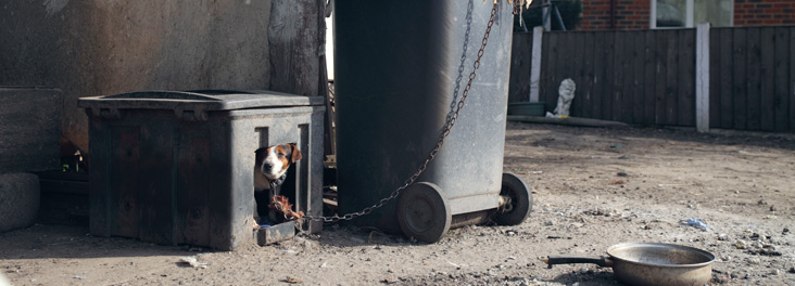 Dog outside treated like rubbish © RSPCA