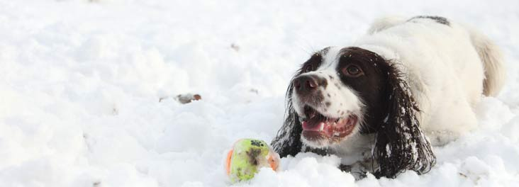 Dog in snow © RSPCA photolibrary
