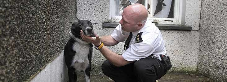 Alan Davies presents The Dog Rescuers © RSPCA