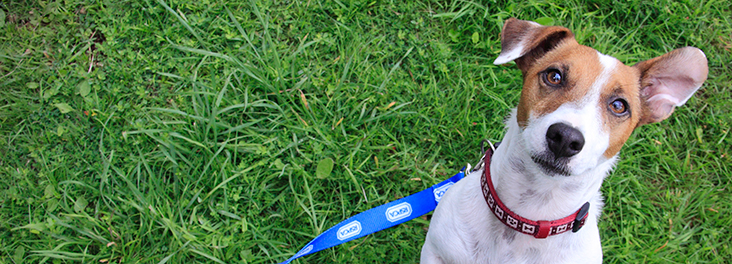Dog looking up towards camera with green grass behind him © RSPCA