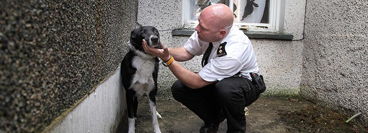 Inspector checking on a dog © RSPCA photolibrary