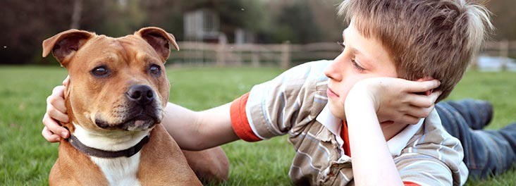 Young boy lying with Staffordshire bull terrier in park © RSPCA photolibrary