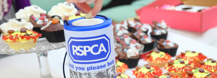 RSPCA fundraising Cupcakes being sold in RSPCA Head office © RSPCA photolibrary