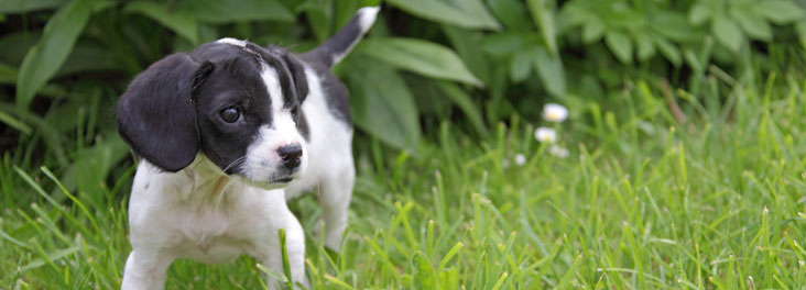 Puppy in a garden © RSPCA photolibrary