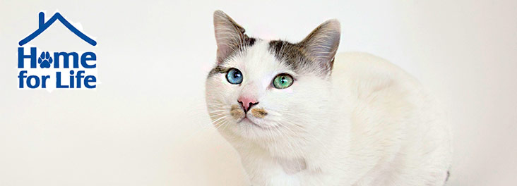 Home for Life portrait of white cat © RSPCA photolibrary