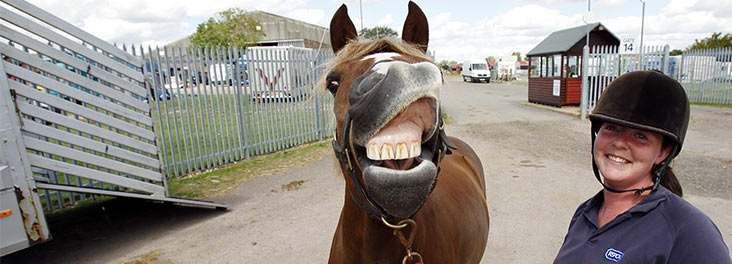 Horse pulling a funny face at the camera © RSPCA Photolibrary