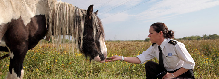Inspector with horse in field © RSPCA photolibrary
