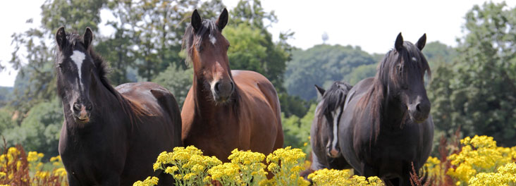 Group of horse in a field © RSPCA photolibrary