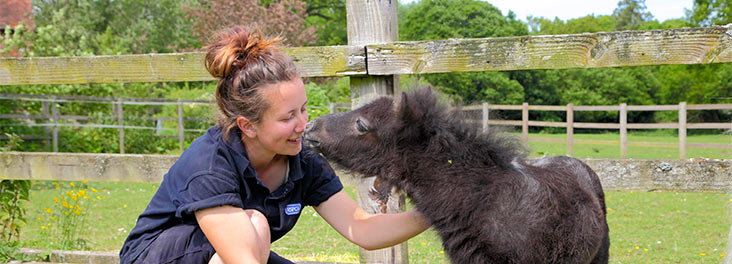 An RSPCA Volunteer taking care of a young foal © RSPCA Photolibrary