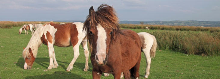 Portrait of single adult horse with others in background © RSPCA photolibrary